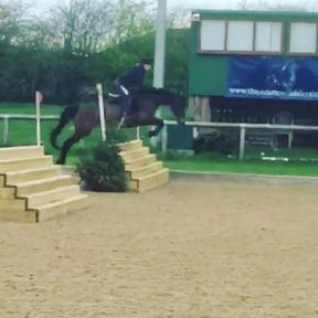 15,2 Irish sports horse
