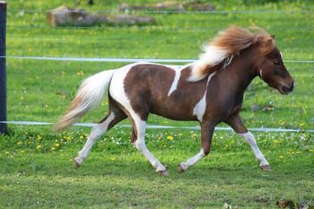 STALLION FOR SALE