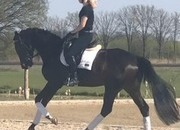Video Added - 4yr old mare by San Amour