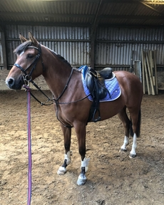 Super smart competition pony for sale