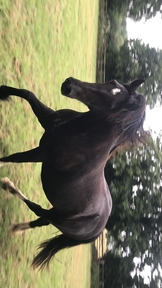 Companion Colt foal wanted!! Will consider Filly