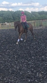 Potential top class  ISRT/small riding horse
