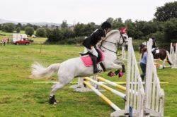 13.3 conemara pony