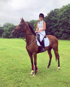 16h bay mare