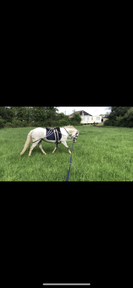 Roxy, 12hh mare, lead rein and first pony