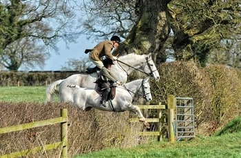 ONE IN A MILLION 12.2hh hunting machine 13 Yr old gelding