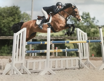 16.3 Fun Horse