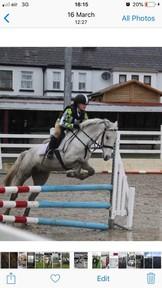Millie 138cm Jumper/Pony Club Pony