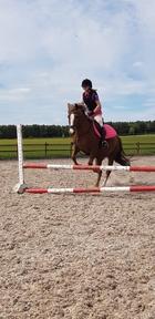 Super, fun Irish Sport pony