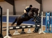 Proper fun 14.1hh Striking liver chestnut pony