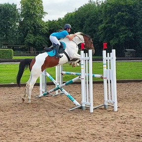 16hh AES mare (Top eventing lines)