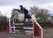 Fabulous 15.2hh Alrounder