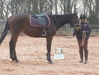 Exracehorse for sale