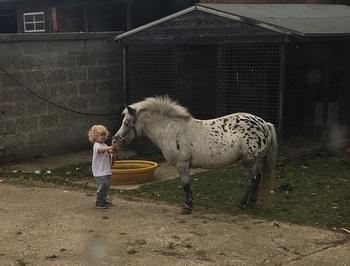 Stunning appaloosa pony for sale