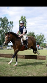 12hh section A Pony