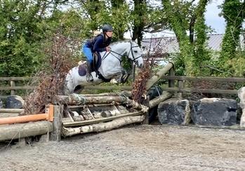 Anna - beautiful class 1 Connemara mare!