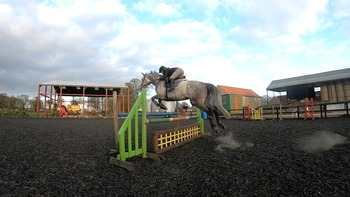 7 year old KWPN Grey mare