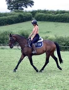 Quality schoolmaster/ riding club alrounder