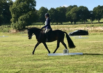 POTENTIAL TOP CLASS WHP / EVENT PONY
