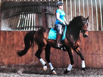 17hh Gelding for share