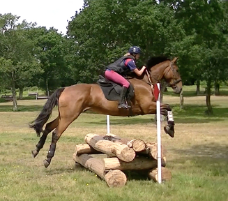 Sharer/Rider wanted for 18hh, 14yo schoolmaster