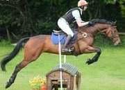 Super Amateur Eventer/Riding club horse