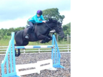 Showjumping Machine Looking for a new rider!