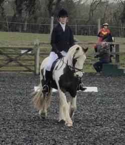 Registered Irish Sports Pony