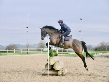 Quality allrounder! Eye catching middleweight gelding!