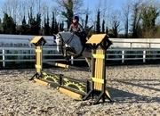Tally - ideal show pony!