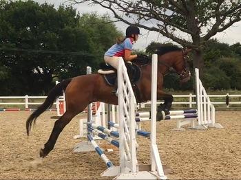 16hh TB mare