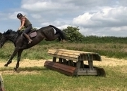 4 going on 14! Anyone's ride! Superb temperament with lots of ability!