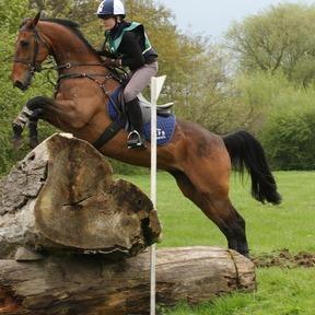 Beautiful Sports Horse