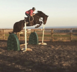 16.2hh alrounder For Part loan 3 days a week