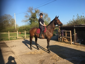 16hh, lovely mare
