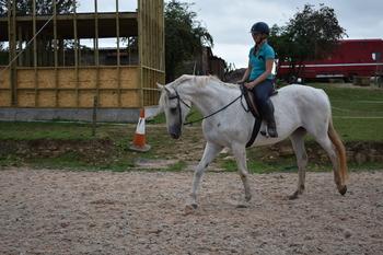 Beautiful ISH mare!