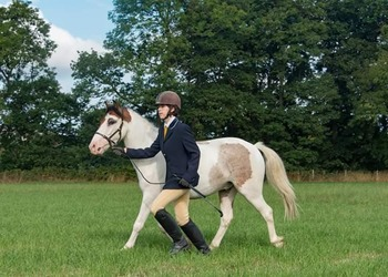 12.2hh Tobiano 4yo Gelding - Charity re-home