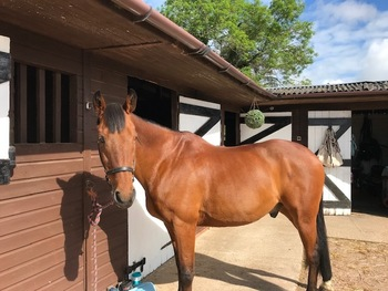 Amazing All-Rounder Quality Horse to share