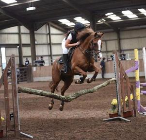 13.2HH Super all Rounder