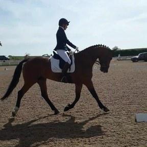16.2 hh Dressage Horse