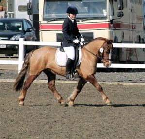 Super PC Pony All arounder & Dressage Pony