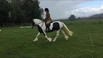 Native type mare