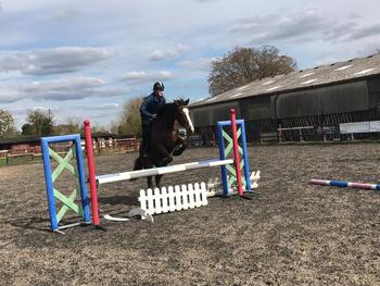 *Part Loan* Lovely 16.1hh Thoroughbred Mare