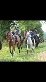 Lovely pony club all rounder