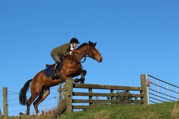Randolin Broodmare/ beautifully breed mare