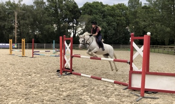 Perfect 13.1hh pony club pony for share - loan/buy potential in future