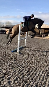 Ideal All Rounder Riding Club Horse in the making!