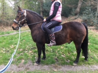 13.2 New Forest Pony