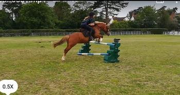 Pony club /jumping