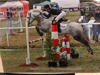 143 Connemara Gelding - super safe and ultra competitive